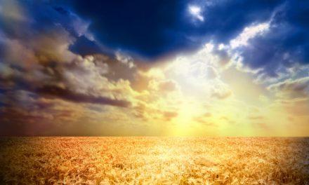 PEYGAMBERİMİZ (SAV), HESAP GÜNÜ KİMSENİN BAŞKASININ GÜNAHINI YÜKLENMEYECEĞİNİ BİLDİRMİŞTİR